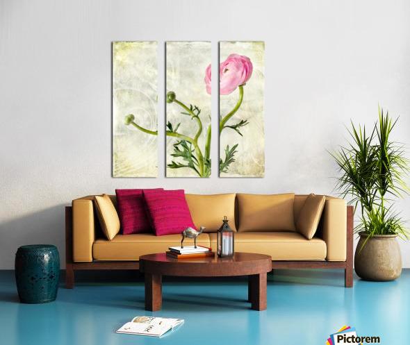 Pink buttercup Split Canvas print