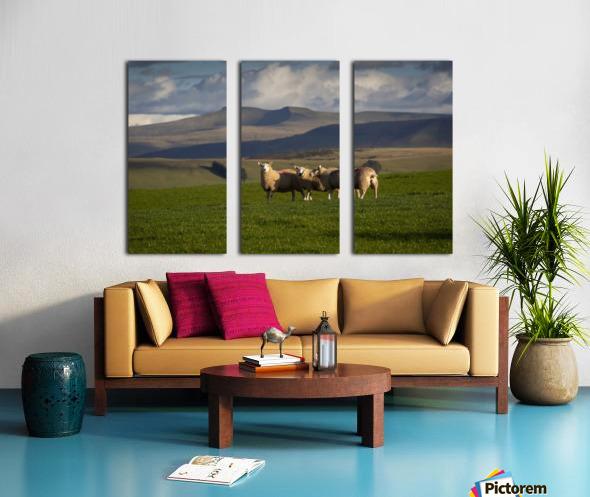 Sheep on the Brecon Beacons Split Canvas print