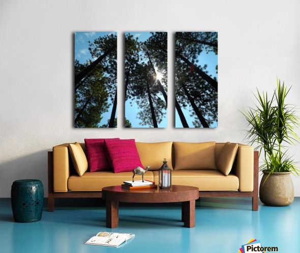 Look Up Split Canvas print