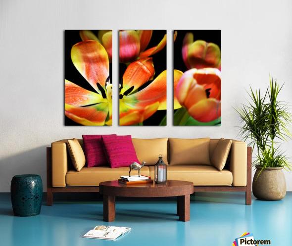Tulip 1 Split Canvas print