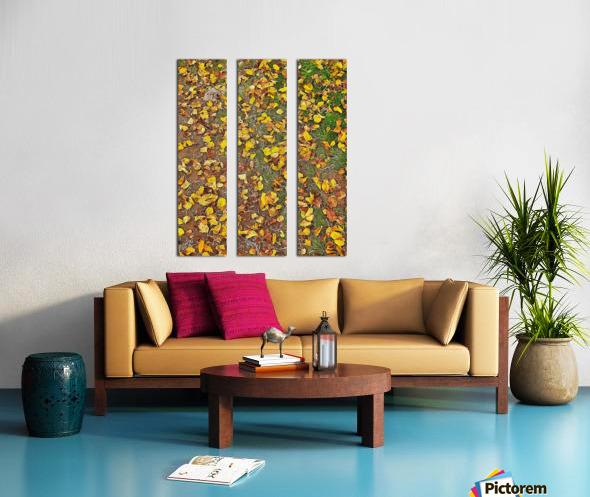 An Autumn Carpet Split Canvas print