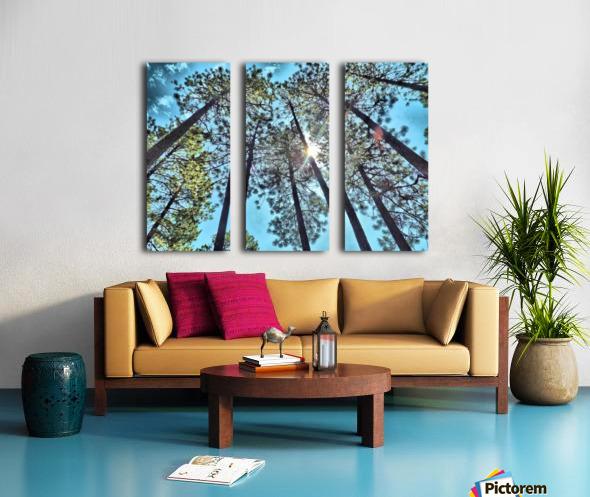 Tree Tops Split Canvas print