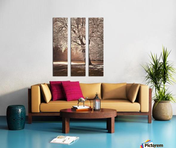 Autumn tree in sunlight Split Canvas print