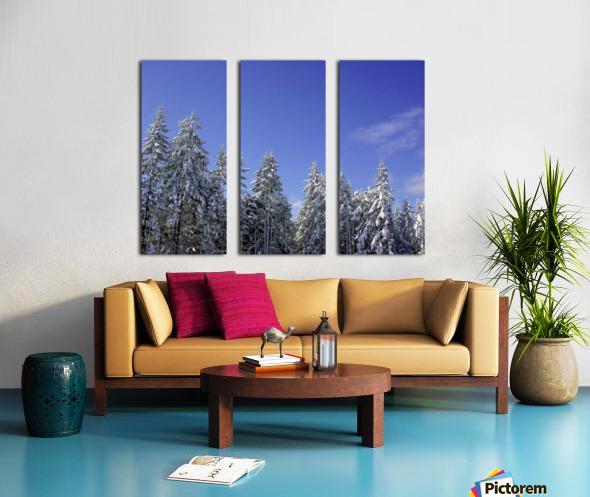 First Snow Split Canvas print