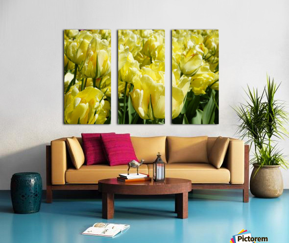 Tulips of the Netherlands 1 of 7 Split Canvas print