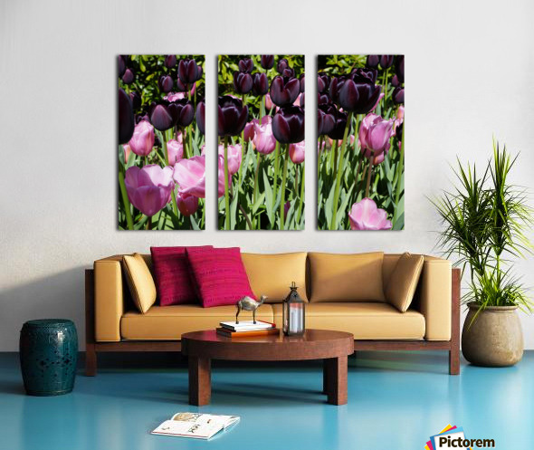 Spring Blooms of Holland 5 of 8 Split Canvas print