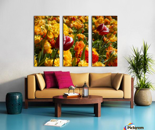 Spring Blooms of Holland 7 of 8 Split Canvas print