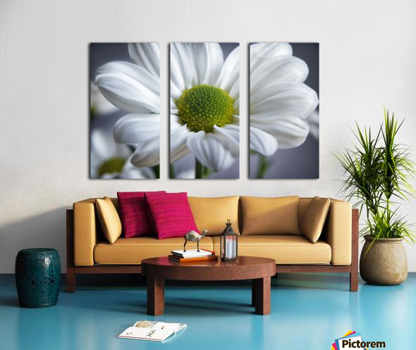 White Daisy Split Canvas print