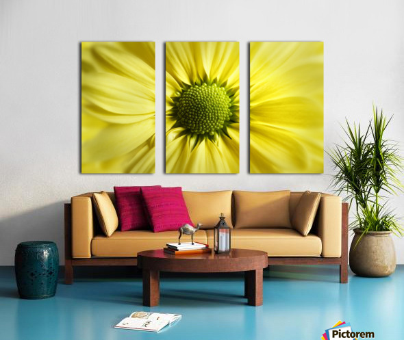 Yellow Daisy Split Canvas print