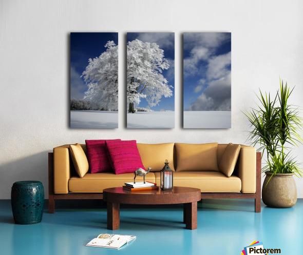 White Windbuche in Black Forest Split Canvas print