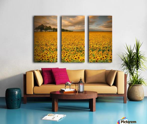 Sunflowers Split Canvas print
