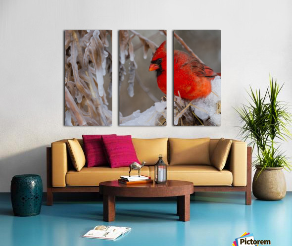 Cardinal ap 1869 Split Canvas print
