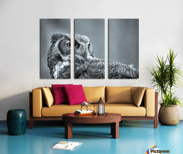 Great Horned Owl ap 2861 B&W Split Canvas print