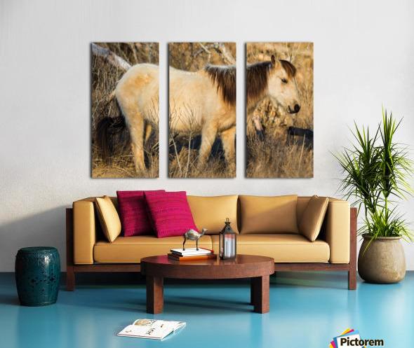 Wild Horse ap 2740 Split Canvas print