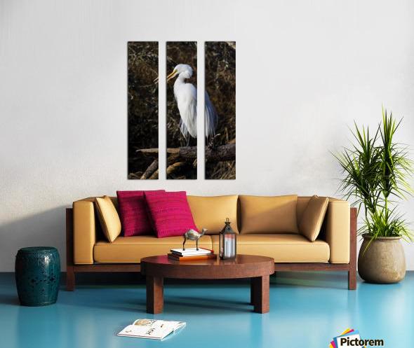 Great White Egret ap 2765 Split Canvas print