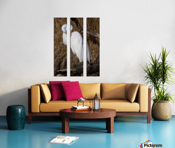 Great White Egret ap 2767 Split Canvas print