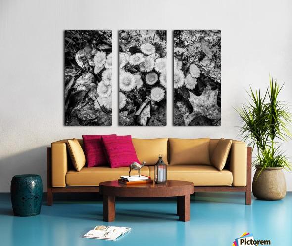 Flowers ap 2222 B&W Split Canvas print
