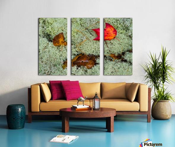 Leaves  N  Lichen ap 1553 Split Canvas print