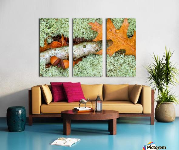 Pin Oak Leaf ap 1557 Split Canvas print