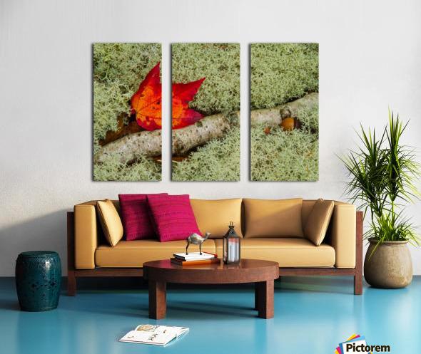 Maple Leaf ap 1555 Split Canvas print