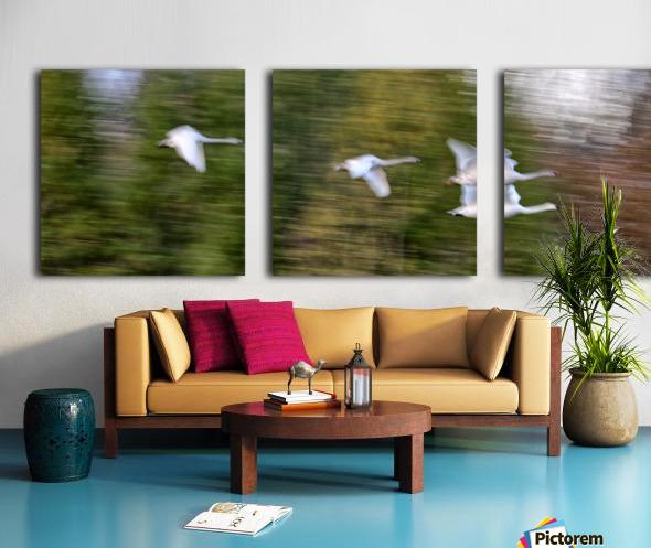 Swan Song ap 2696 Split Canvas print