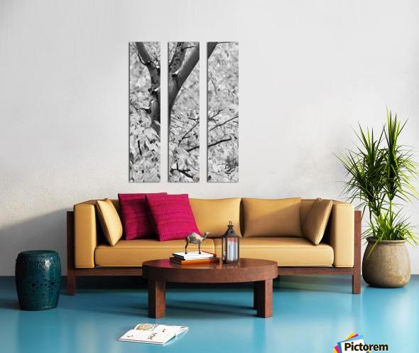 Beech Tree ap 1586 B&W Split Canvas print