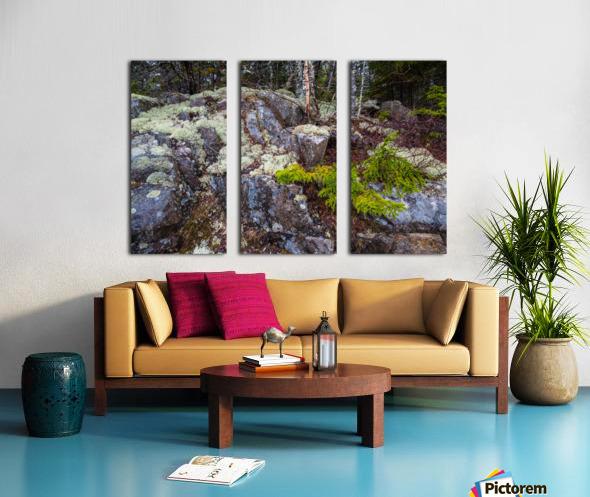 Moss   Lichen ap 2294 Split Canvas print