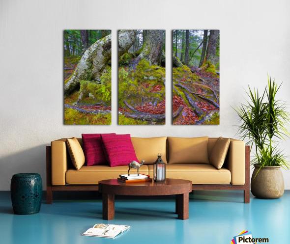 Moss   Lichen ap 2196 Split Canvas print