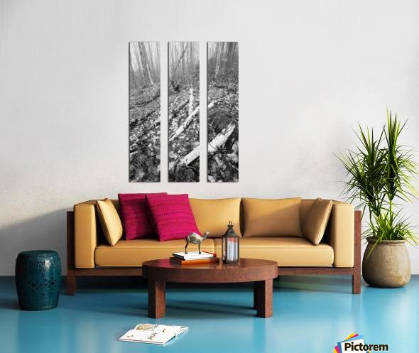 White Birch ap 2186 B&W Split Canvas print