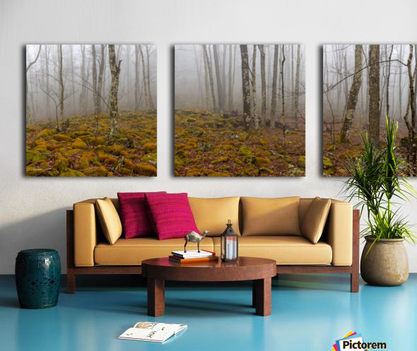 Mystic Forest apmi 1620 Split Canvas print