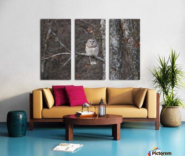 Sleepy Owl Split Canvas print