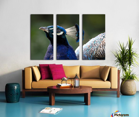 Peacock Split Canvas print