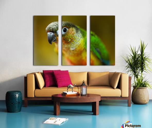 Parakeet Split Canvas print