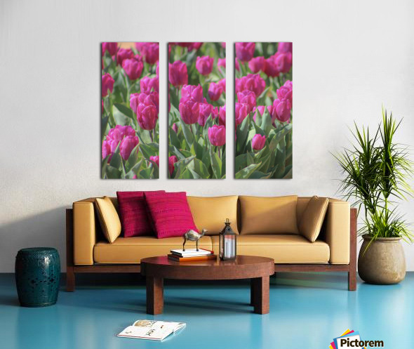 Fantasically Fuschia Tulips Split Canvas print