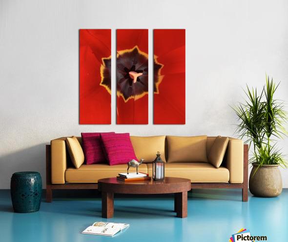 Treasured Tulip Split Canvas print