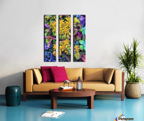 Echeveria Hybrid With Yellow Flowers Split Canvas print