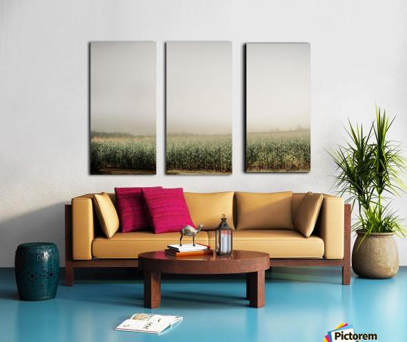 Summer Dust Cornfield Split Canvas print