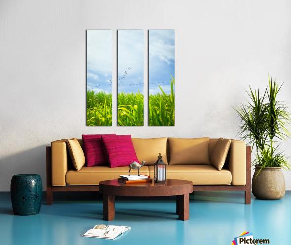 Midsummer Cornfield Split Canvas print