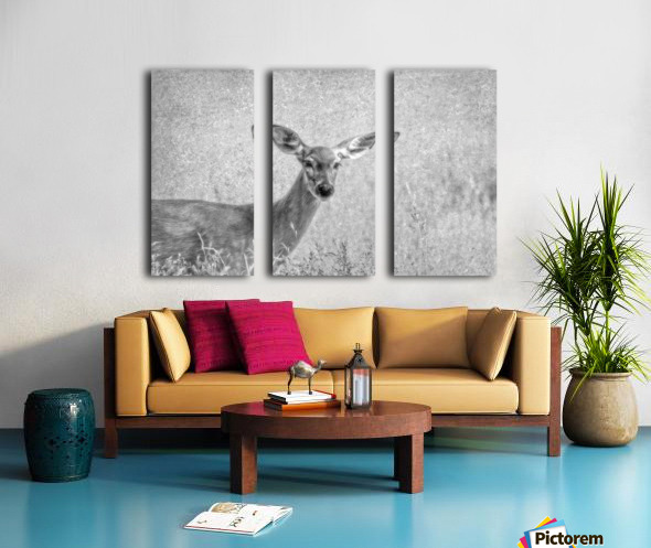 Pretty Doe Split Canvas print