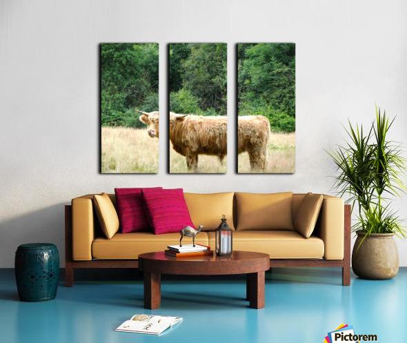 Hairy Coo - Scottish Highlands Split Canvas print
