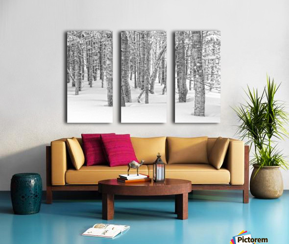 Pines at the Skyline Trail Split Canvas print