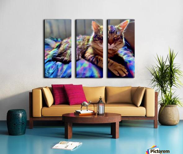 Rainbow Kitten Surprise  Split Canvas print