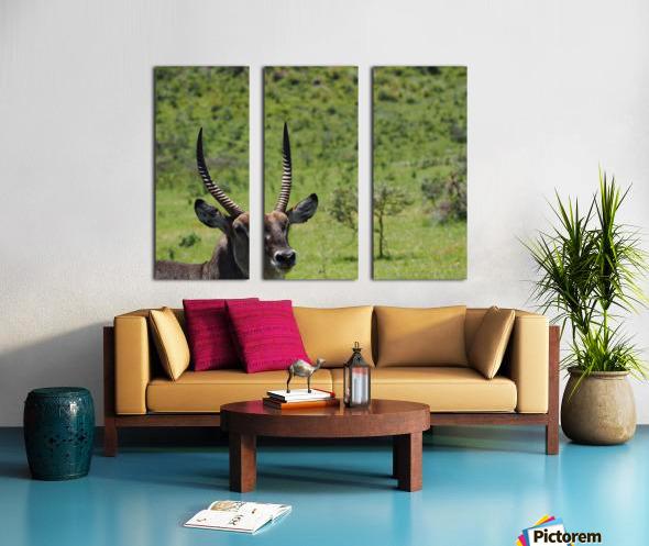 D8061889 B94D 4585 85A6 654F34B6CEB0 Split Canvas print