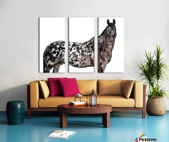 Spotted Horse Portrait Split Canvas print