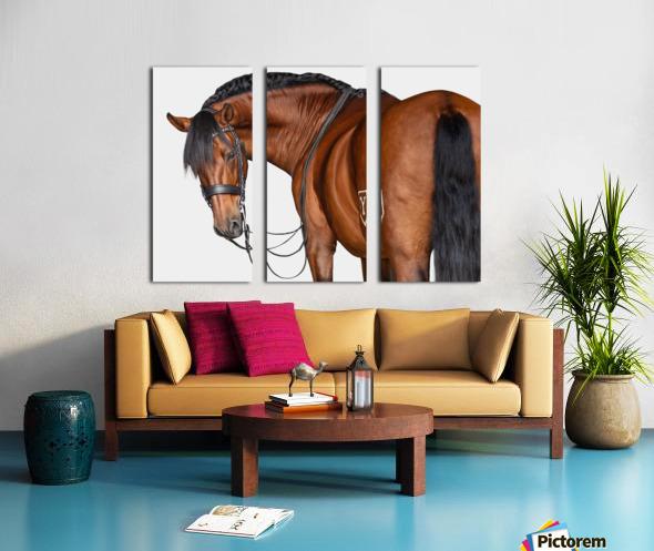 Bay Horse Portrait Split Canvas print