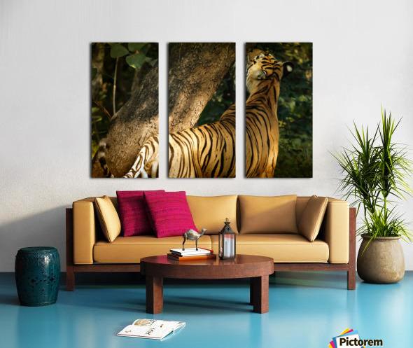 Indian Tiger Split Canvas print