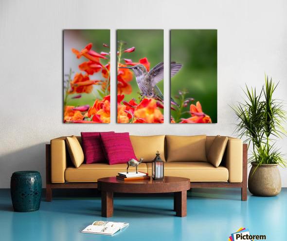Hummingbird Split Canvas print