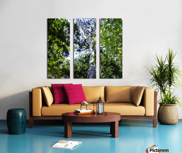 Skyview Canopy Split Canvas print