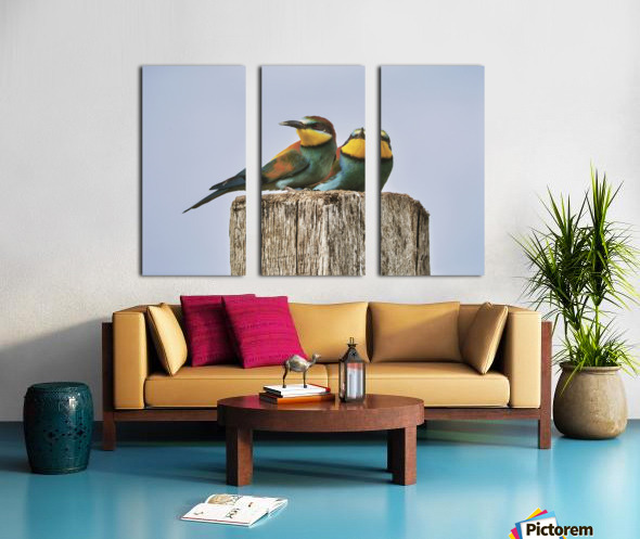 European Bee-Eaters Split Canvas print