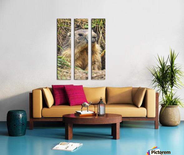 Alpine Marmot Split Canvas print